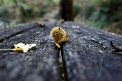 El otoño colorea IX Foto de archivo