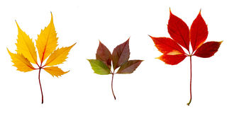 El otoño colorea las hojas Fotografía de archivo