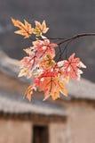 El otoño colorea las hojas con los hutongs en el fondo, Pekín, China Fotos de archivo