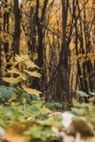 El otoño colorea las hojas en el bosque Fotografía de archivo
