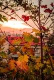 El otoño colorea las hojas en la puesta del sol Imagenes de archivo