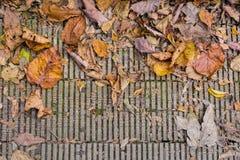 El otoño colorea las hojas en piso de madera Fotografía de archivo libre de regalías