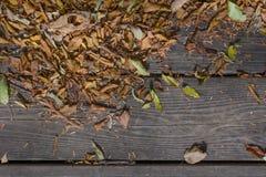 El otoño colorea las hojas en piso de madera Fotografía de archivo