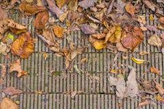 El otoño colorea las hojas en piso de madera Fotos de archivo libres de regalías