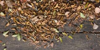 El otoño colorea las hojas en piso de madera Imagenes de archivo