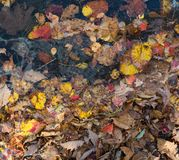 El otoño colorea las hojas y el agua Fotografía de archivo