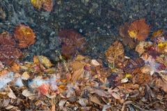 El otoño colorea las hojas y el agua Imagen de archivo libre de regalías