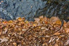 El otoño colorea las hojas y el agua clara Imágenes de archivo libres de regalías