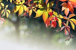 El otoño colorea textura con el bokeh Imágenes de archivo libres de regalías