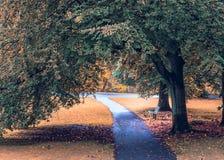 El otoño colorea un parque con un banco y una pista que camina imagen de archivo