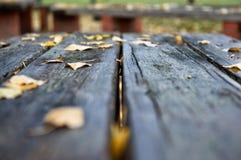 El otoño colorea XXIX Fotos de archivo libres de regalías