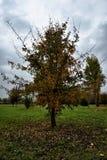 El otoño colorea XXVII Fotografía de archivo libre de regalías