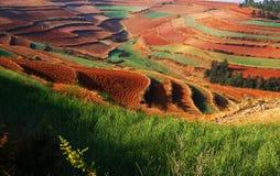El otoño colorido archivado Foto de archivo libre de regalías