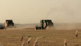 El otoño combina en el campo que cosecha el trigo almacen de video