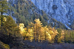 El otoño de Adén Fotos de archivo libres de regalías