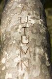 El otoño de la palabra tallado en un árbol Imagenes de archivo