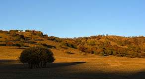 El otoño de la pradera de Bashang Imagen de archivo