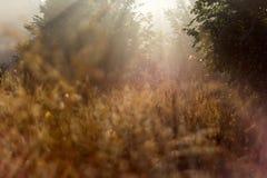 El otoño de la pradera de Bashang Fotos de archivo