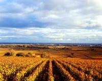 El otoño de oro Foto de archivo libre de regalías