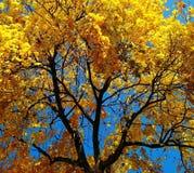 El otoño de oro ha venido Imagenes de archivo