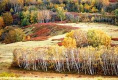 El otoño de Wulanbutong Foto de archivo libre de regalías