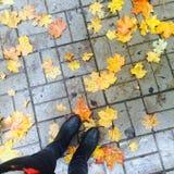 El otoño está aquí Foto de archivo libre de regalías