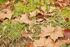 El otoño está aquí Fotografía de archivo libre de regalías