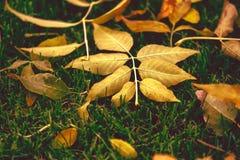 El otoño está aquí Hojas en el parque Imágenes de archivo libres de regalías