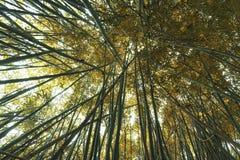 El otoño está por todas partes fotos de archivo