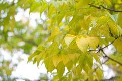 El otoño está viniendo Imágenes de archivo libres de regalías