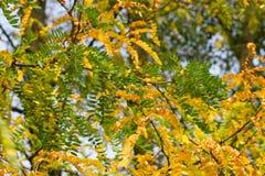 El otoño está viniendo Foto de archivo
