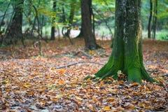 El otoño está viniendo Foto de archivo libre de regalías