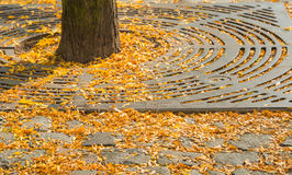 El otoño está viniendo Fotografía de archivo libre de regalías