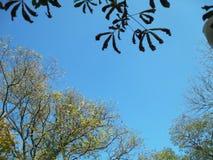 El otoño está viniendo fotos de archivo libres de regalías