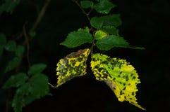 El otoño está viniendo Fotos de archivo