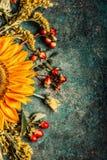 El otoño florece el ajuste con los girasoles en el fondo rústico oscuro, visión superior Imágenes de archivo libres de regalías