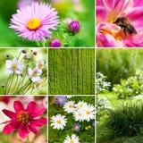 El otoño florece el collage Fotografía de archivo