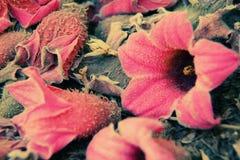 El otoño florece el fondo fotos de archivo