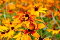 El otoño florece en un jardín en el parque en Petrich al municipio octubre Bulgaria Sun foto de archivo