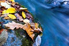 El otoño hojea cerca de corriente foto de archivo