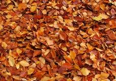 El otoño hojea fondo Fotos de archivo