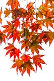 El otoño hojea los árboles en Países Bajos imagen de archivo