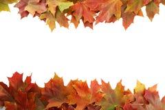 El otoño hojea marco en el fondo blanco fotografía de archivo
