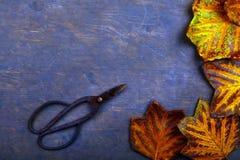 El otoño hojea tabla aguda imagen de archivo