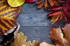 El otoño hojea tabla aguda fotos de archivo