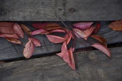 El otoño, joga, se relaja, calma, tiempo libre, dreamstime, mindfulnes, mindfulness, cc Imagenes de archivo