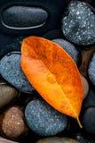 El otoño, la caída y el zen como licencia anaranjada de los conceptos caen en el st del río Imagen de archivo libre de regalías