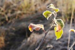 El otoño pasado deja en una helada chispeante el cambio del otoño y del invierno imágenes de archivo libres de regalías