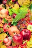 El otoño, rojo, amarillo, verde se va con las manzanas y las bayas Fotos de archivo