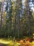 El otoño Suecia colorea colores de las hojas de los árboles Fotos de archivo libres de regalías